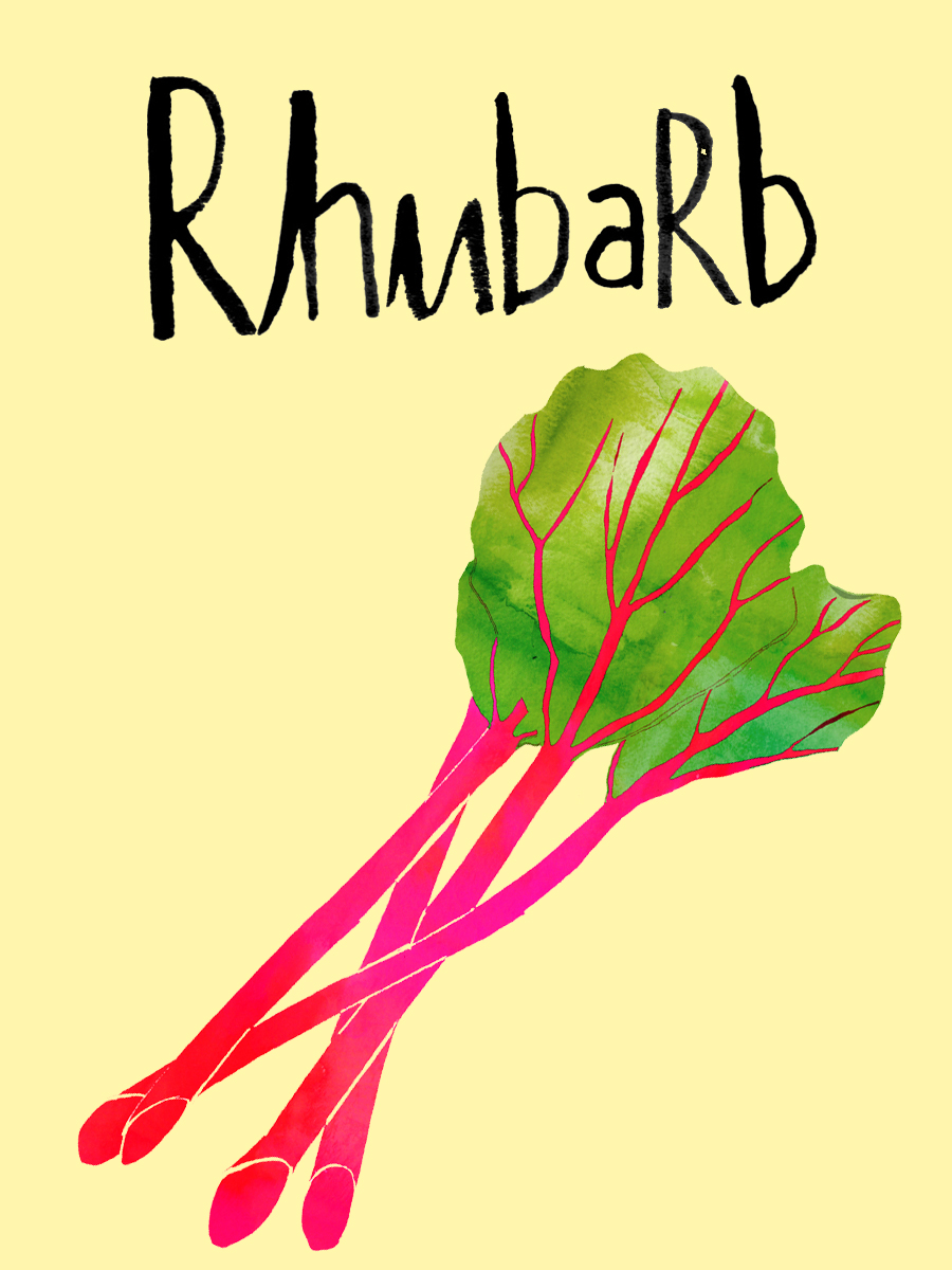 What does a rhubarb plant look like
