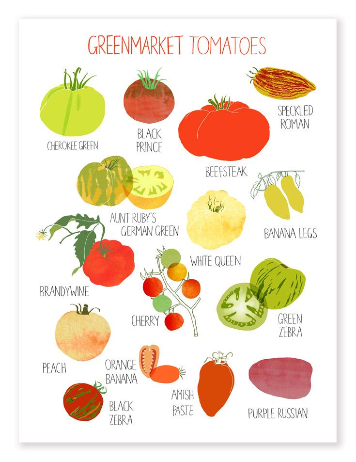 Greenmarket Tomatoes